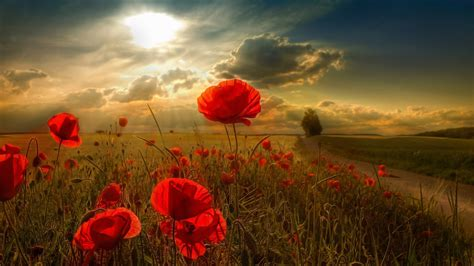 Sunlight Wallpapers | HD Wallpapers | ID #10977
