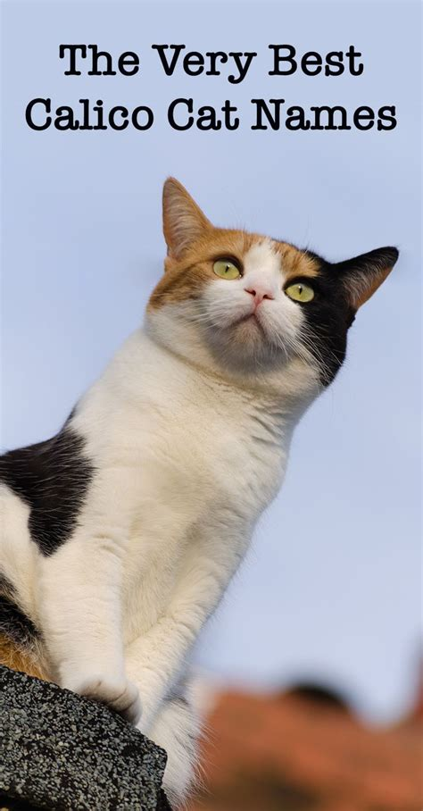Calico Cat Names - 250 Great Ideas For Naming Your Calico
